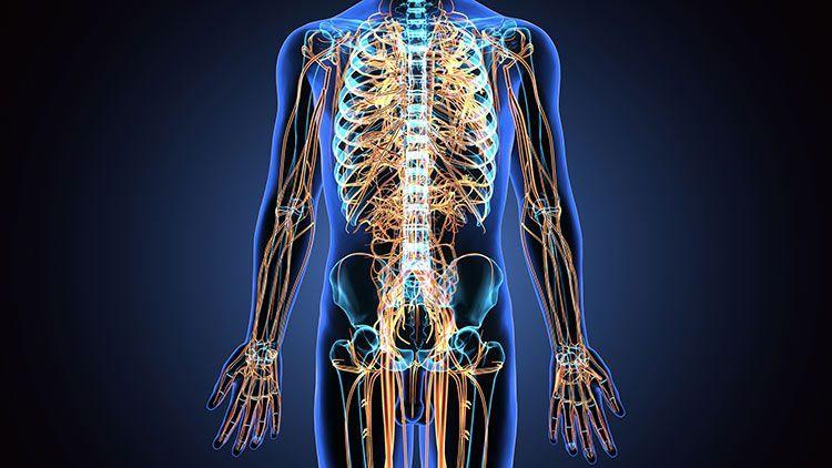 بررسی تمام عصب های بدن