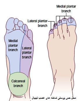 اعصاب تونل تارس