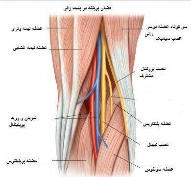 الکترود تحریک کننده در نوار عصب و عضله